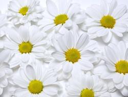 Цветы_223