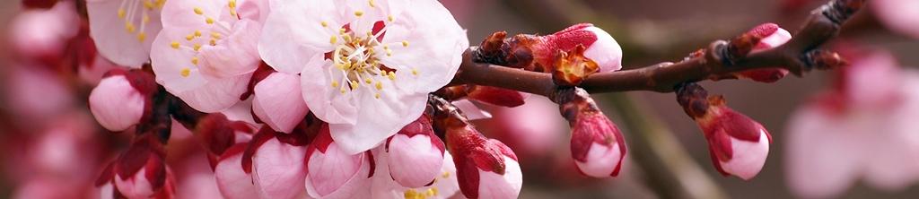 S_цветы_195