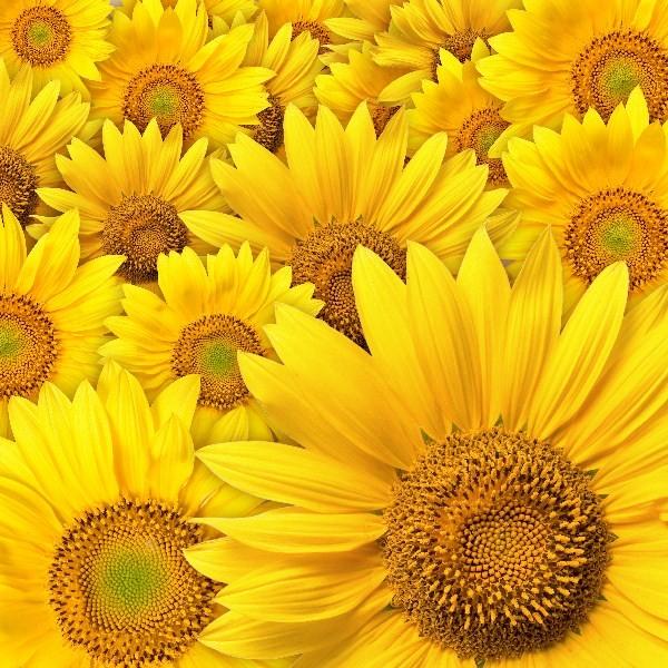 Цветы_006