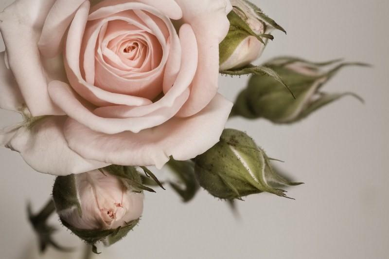 Цветы_197