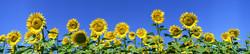 S_цветы_043