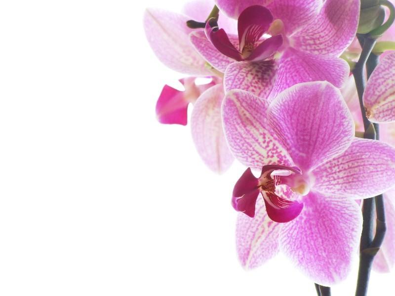 Цветы_190