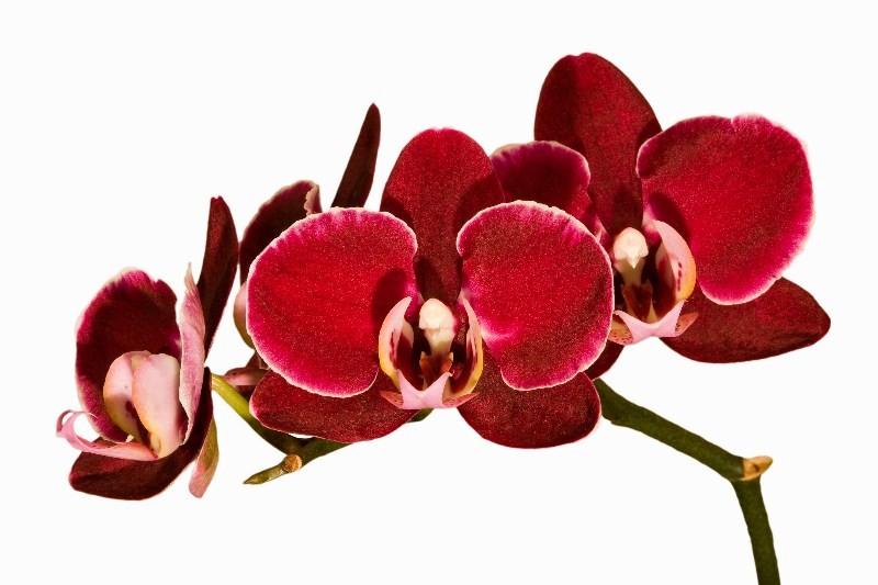 Цветы_053