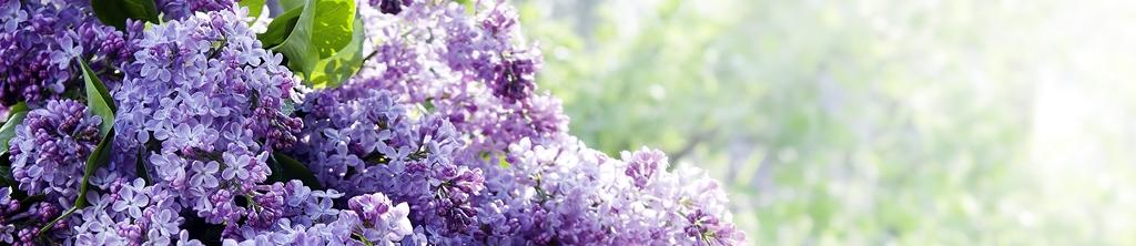 S_цветы_028