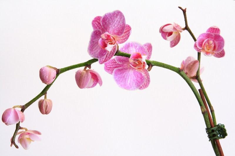 Цветы_033