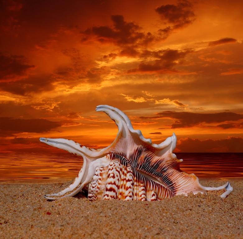 Морская тема_364