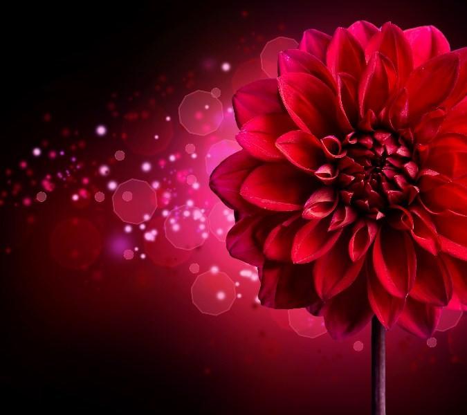 Цветы_243