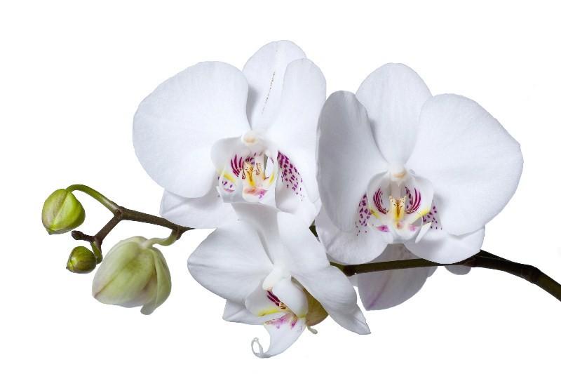 Цветы_021