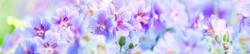 S_цветы_085