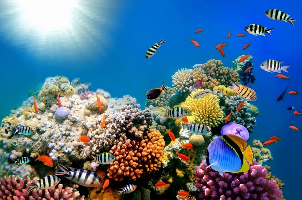 Морская тема_239