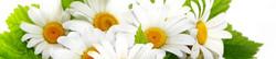 S_цветы_164