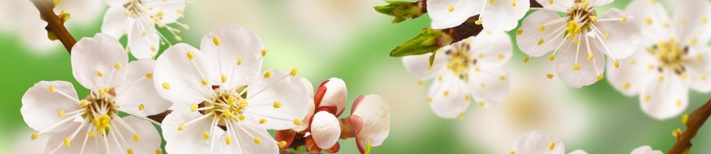 S_цветы_313