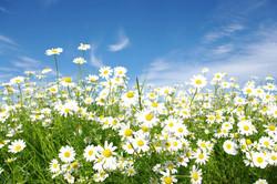 Цветы_238