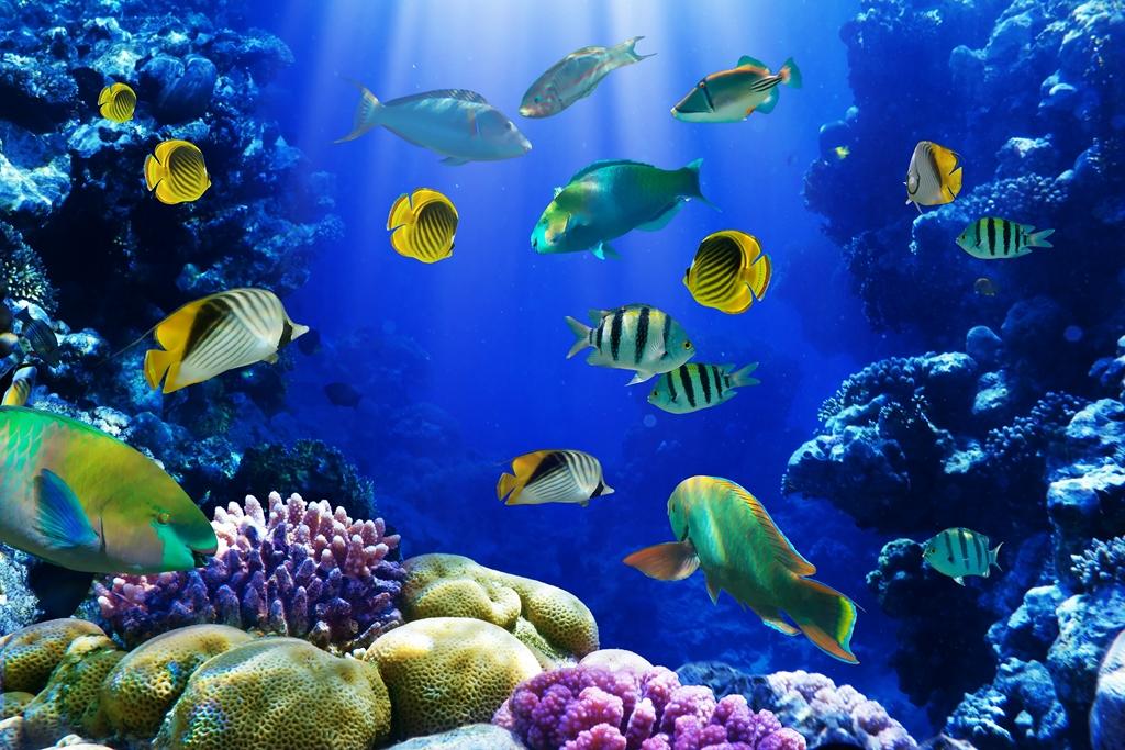 Морская тема_073