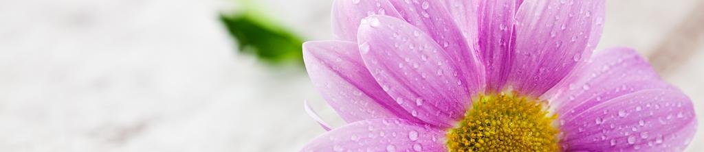 S_цветы_020