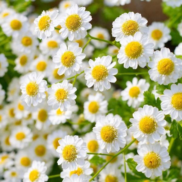 Цветы_251