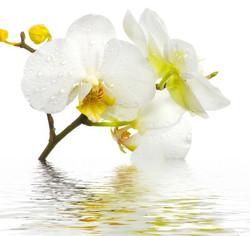 Цветы_051