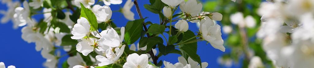 S_цветы_030