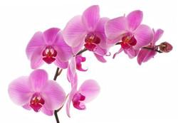 Цветы_048