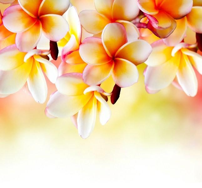 Цветы_255