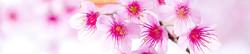 S_цветы_125