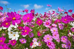 Цветы_210
