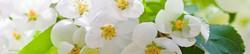 S_цветы_023