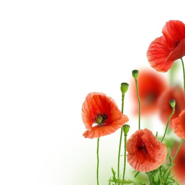 Цветы_054