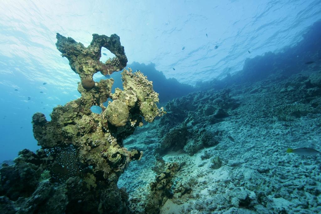 Морская тема_455
