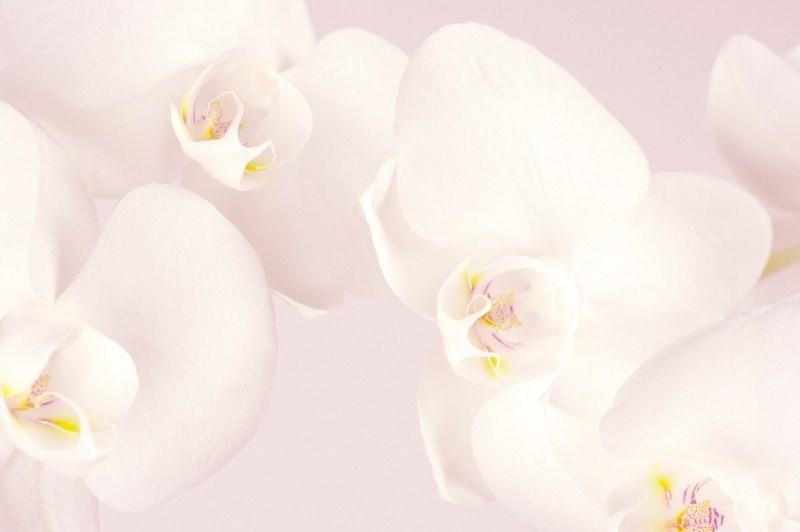 Цветы_253