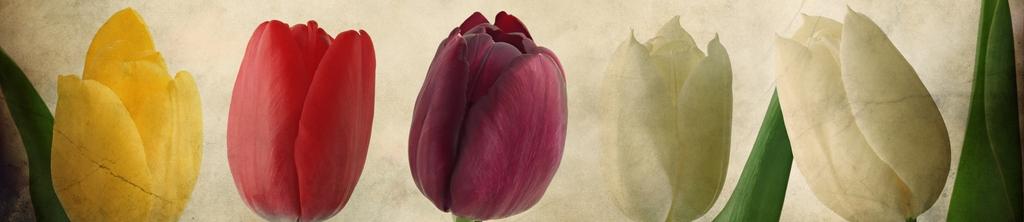 S_цветы_076