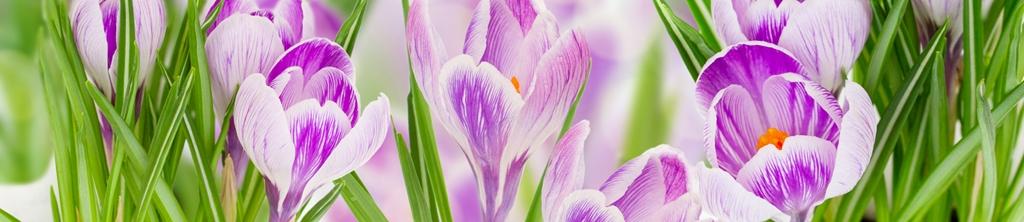 S_цветы_158