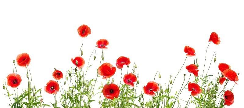Цветы_138