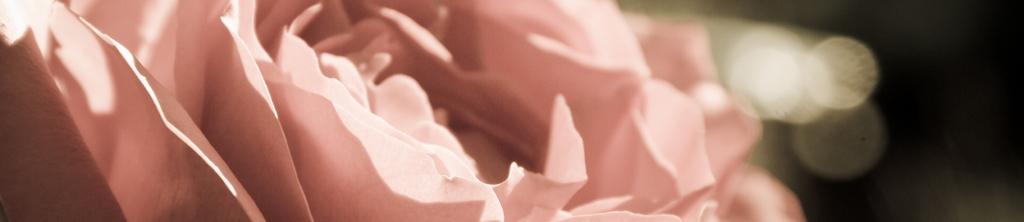 S_цветы_002