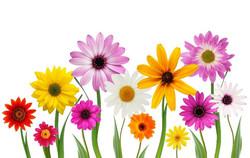 Цветы_031