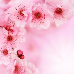 Цветы_075