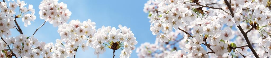 S_цветы_160