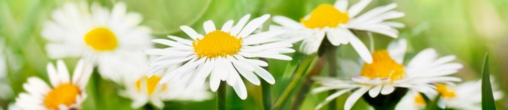 S_цветы_296
