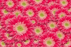 Цветы_109