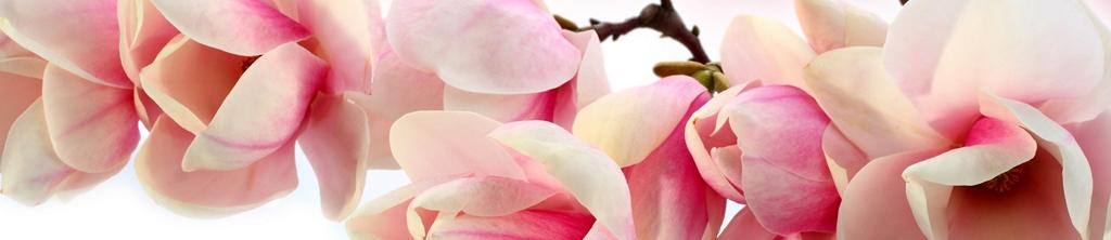 S_цветы_165