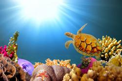 Морская тема_171