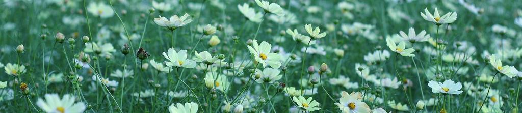 S_цветы_011