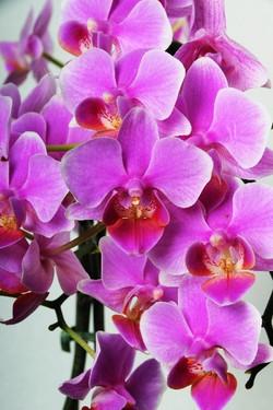 Цветы_081