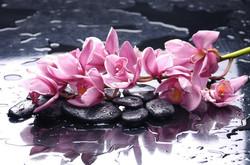 Цветы_136