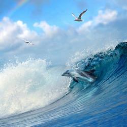 Морская тема_119