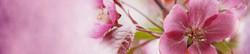 S_цветы_335