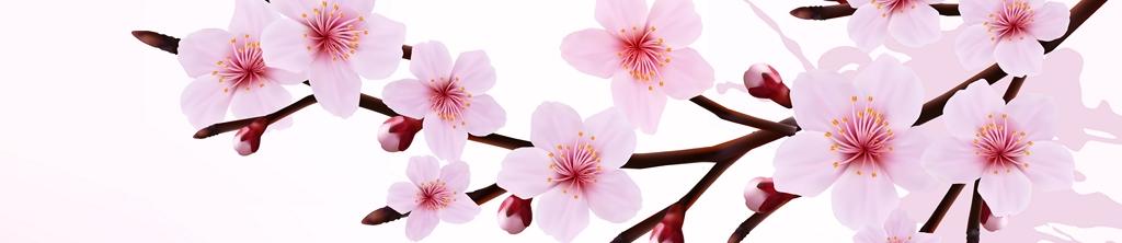 S_цветы_257