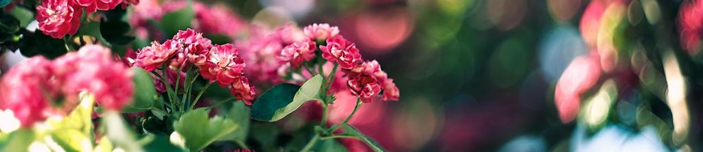 S_цветы_181