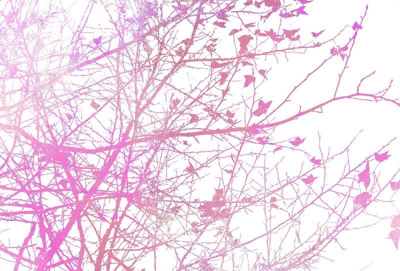 Цветы_192