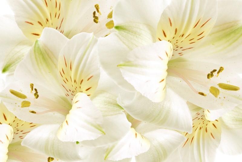 Цветы_213